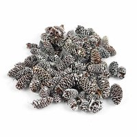 Birch-Pine-Zapfen 60g