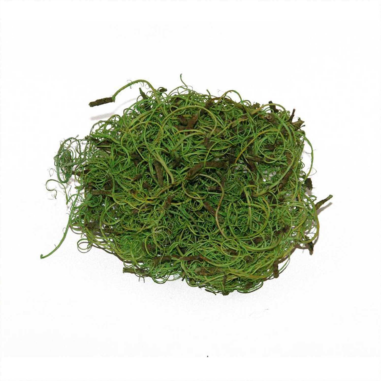 Curlymoos zum Abdecken von Substrat im Pflanzenbild
