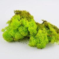 Islandmoos apfelgrün 50g