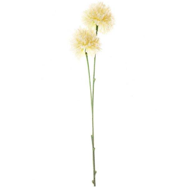 Allium creme 42cm