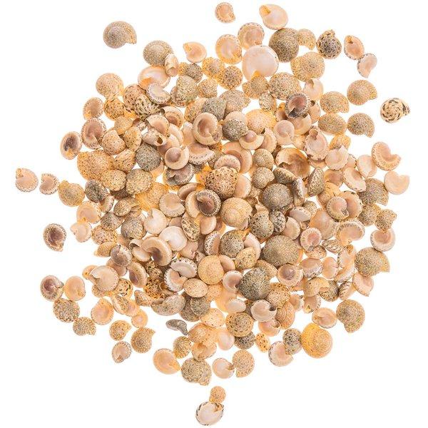 Muscheln Perlata 0,5-1cm