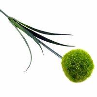 Allium grün 69cm